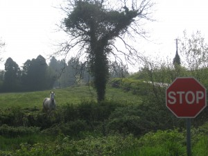 STOP says the White Horse
